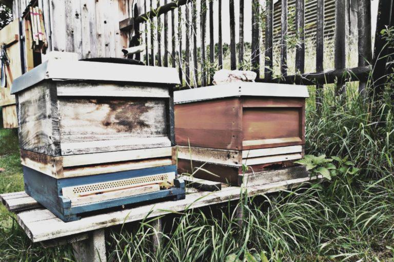 Beispielbild_Bienenzargen